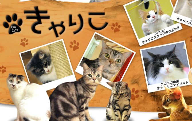 新宿猫カフェのきゃりこ